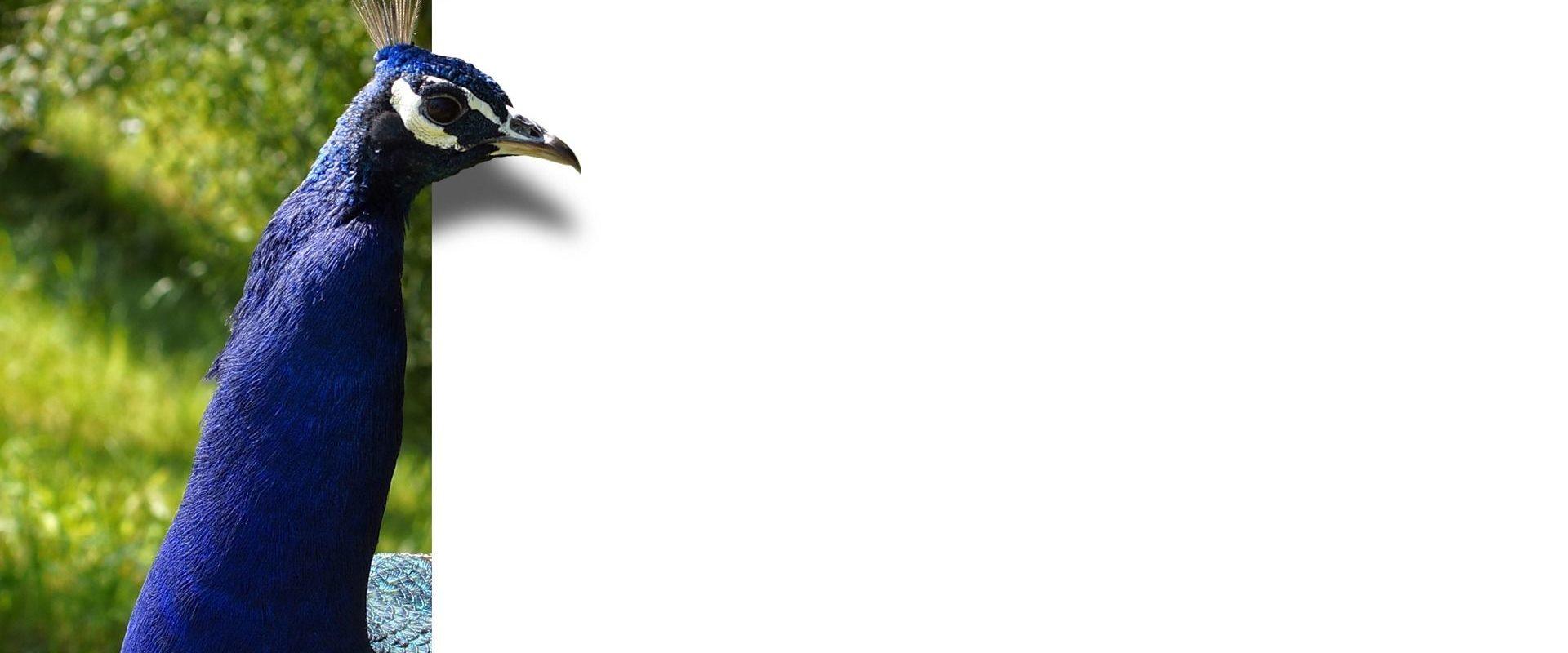 Installation et paramétrage d'un compte mail sur Thunderbird