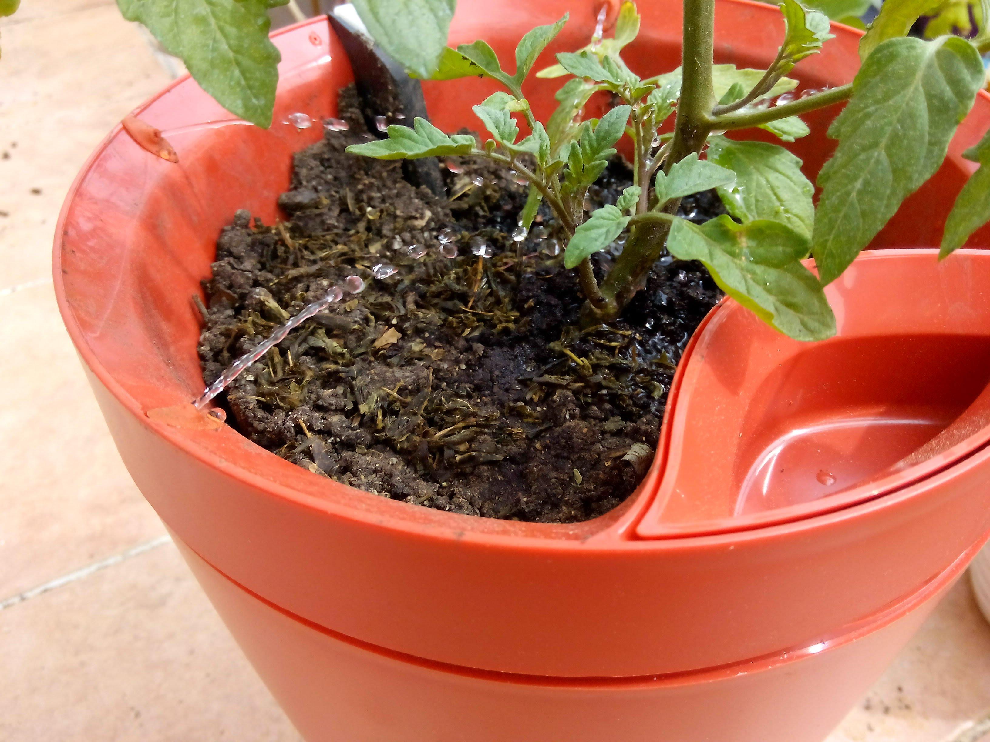 Arrosage Pour Plantes En Pot parrot pot : le pot intelligent qui s'occupe de vos plantes