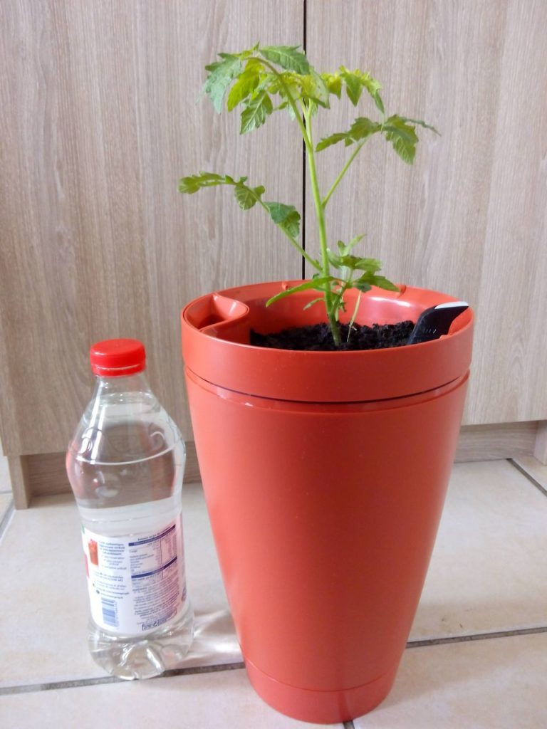 Parrot Pot & plant de tomate