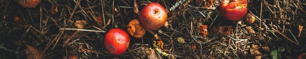 Bannière déchets organiques