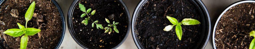 Compost Carbiolice