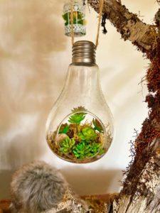 Ampoule terrarium